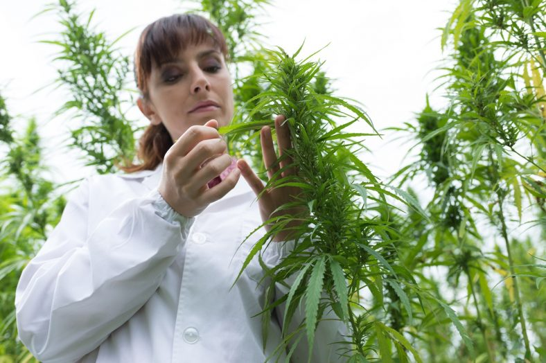 medical marijuana benefits risks laws More states are passing laws that allow people to use medical marijuana risks and limits medical marijuana is not monitored like fda-approved medicines.